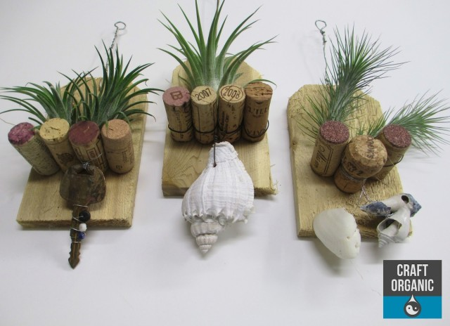 tillandsia and cork plaque 03