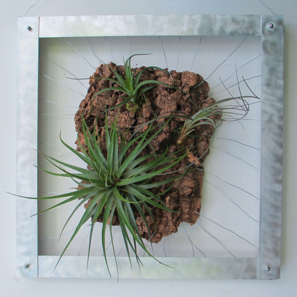 Tillandsia Wall Mount