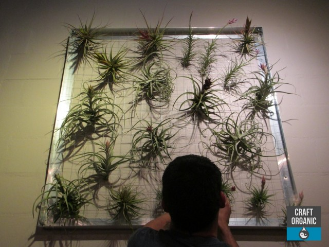 Living Tillandsia Wall 001