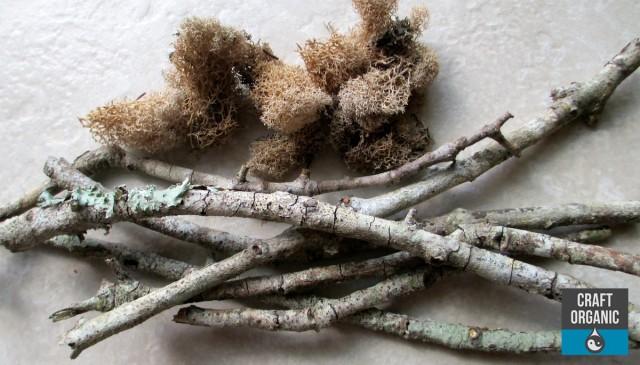 Sticks & Moss