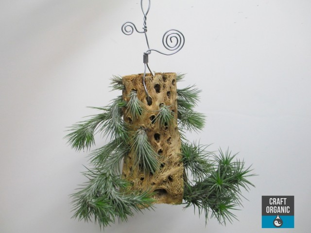 Tillandsia on Cholla Wood 01