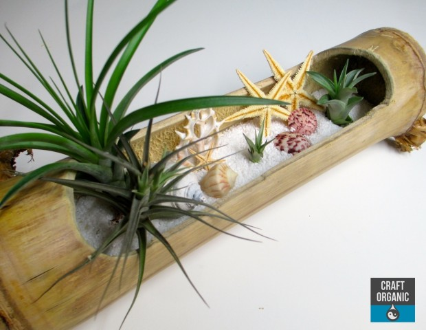 Tillandsia_Beach03