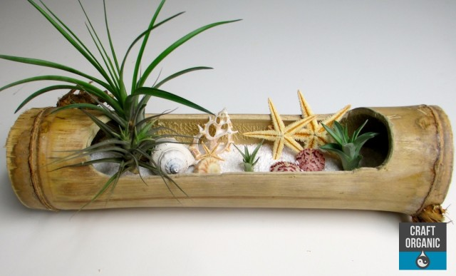 Tillandsia_Beach04