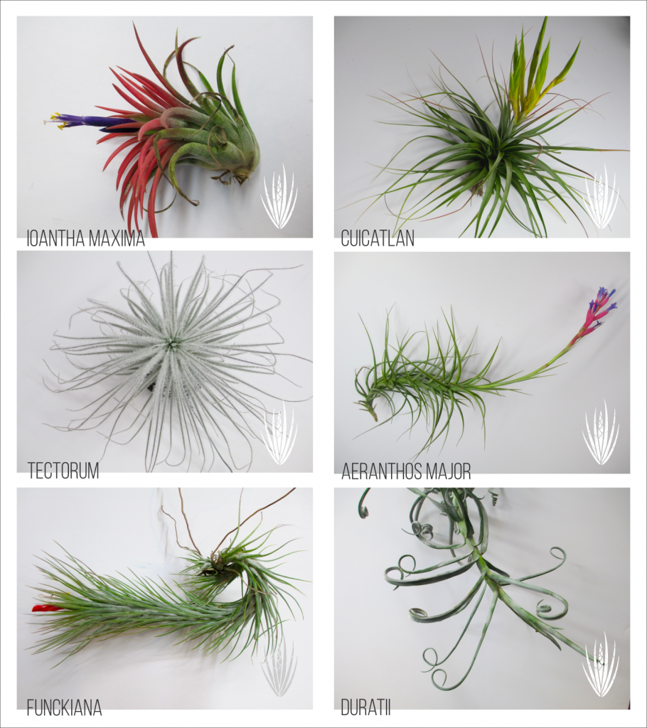 HealthyAirPlants