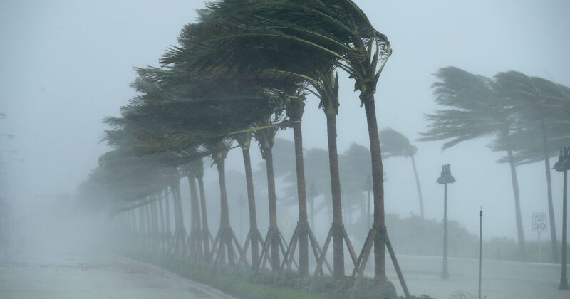 Paramount Fencing's Comprehensive Guide to Hurricanes