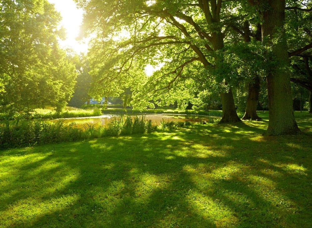 Nature One Landscape Design