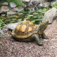 Tortoise (Head Up)