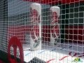 Carolina Hurricanes Inflatable Hockey Bouncer