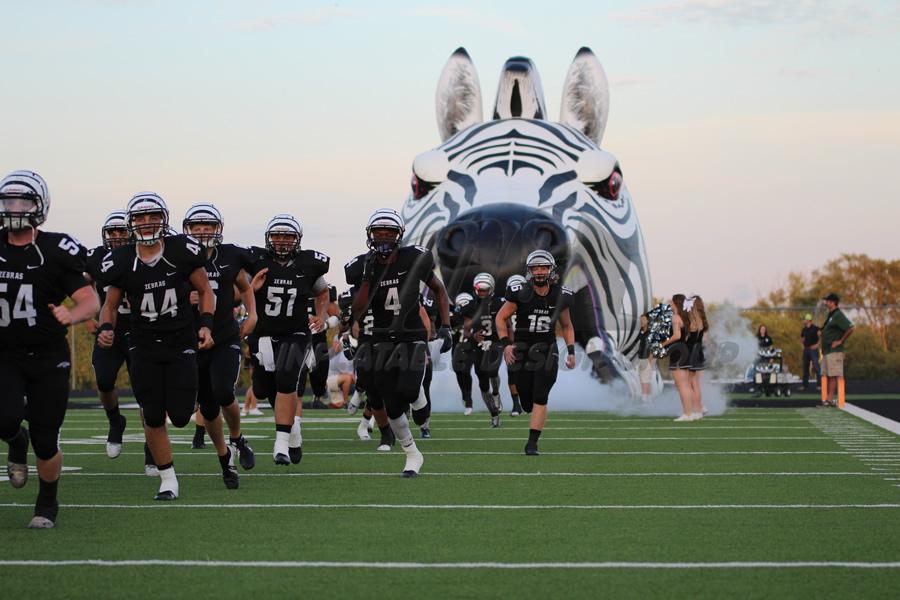 Inflatable Zebra Action