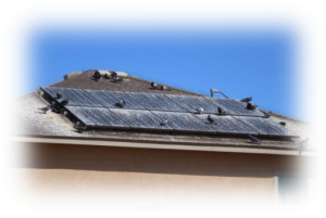 Pigeons infestation by solar panels