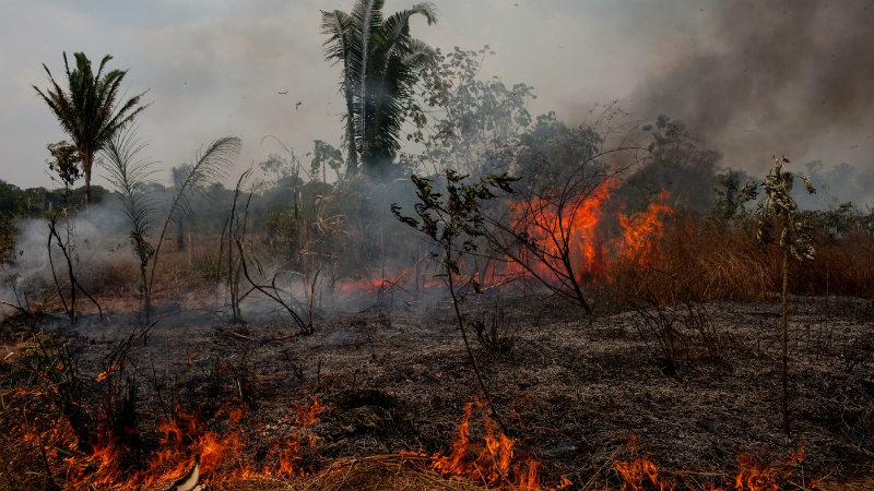 Why is Amazon Forest burning up?