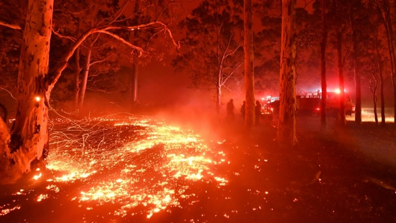 Trees are crying badly – Australia Fires