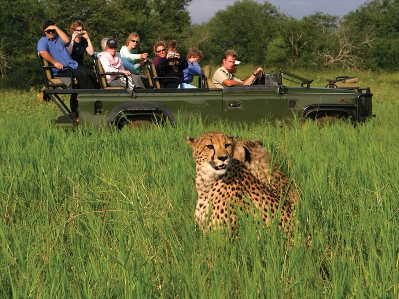 Tourists on a safari in a jeep with leopard in foreground in Chobe National Park