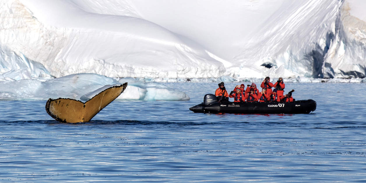 Silversea expedition boat with guest photographing the tail of a whale in Wilhelmina Bay, Antarctica