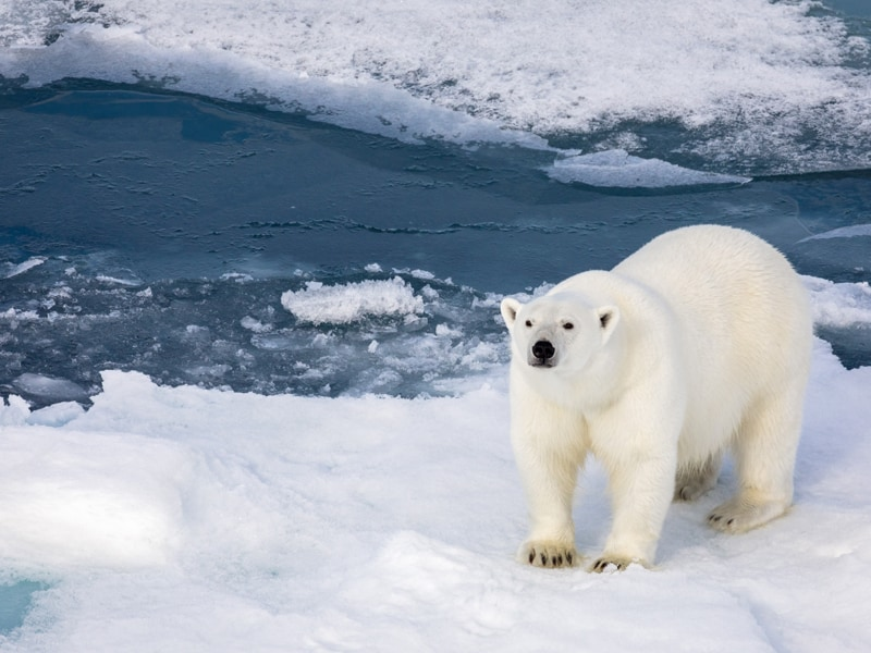 Get Closer to the Beauty  of the Polar World with Silversea