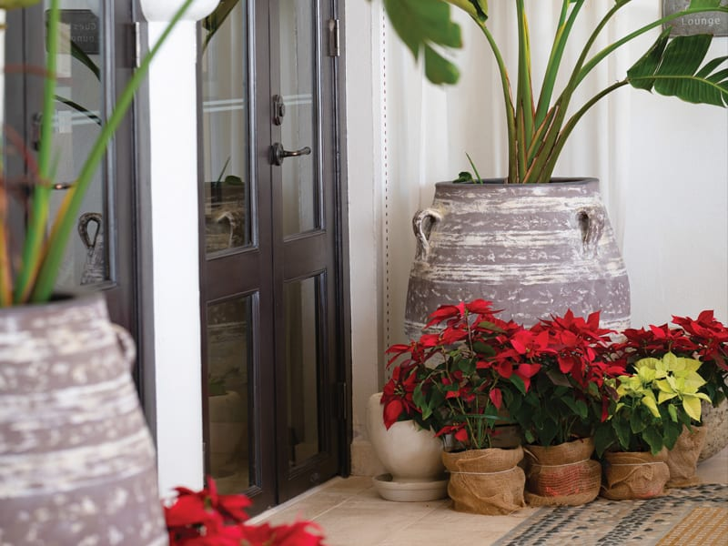 Belmond Cap Juluca doorway decorated with poinsettias