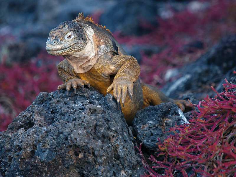 Experience All Inclusive  Galapagos with Silversea