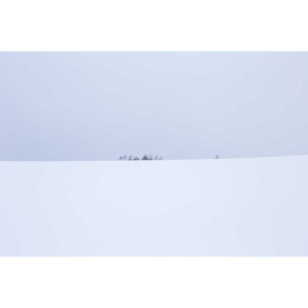minimalist snow field with group of trees