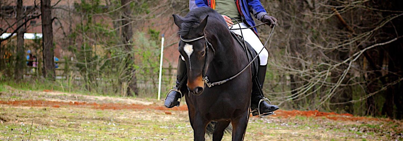 harmony + cross Equitation
