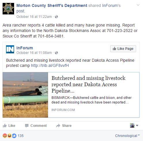 morton-posts-on-cows