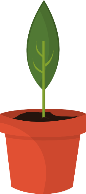 Potted plant