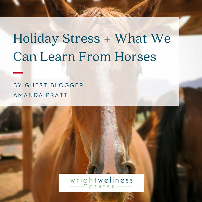 2018-Holiday-Stress-What-We-Can-Learn-From-Horses
