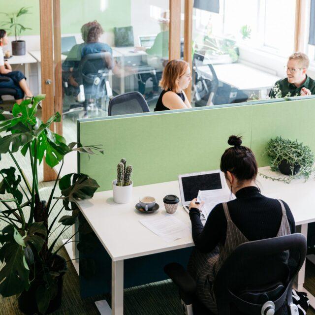 Desk Dividers Green
