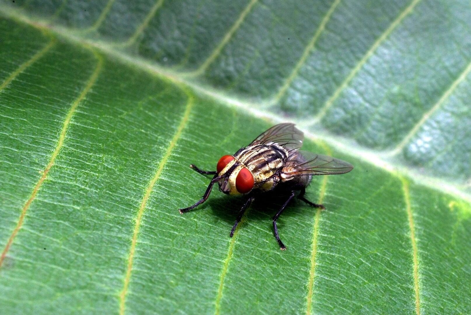 Newman Pest Control