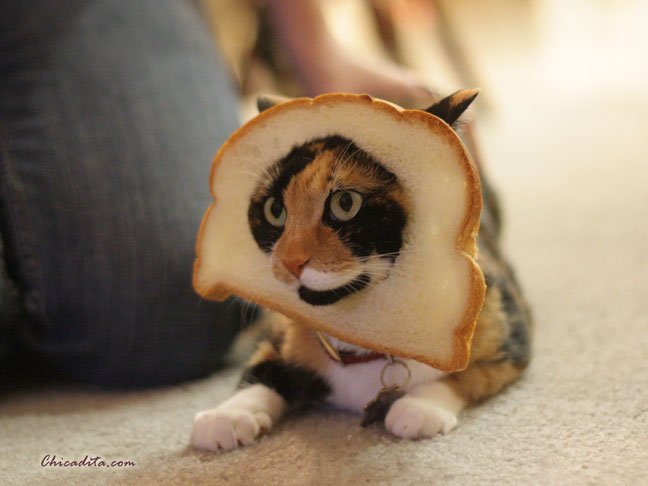 In Bread Cat