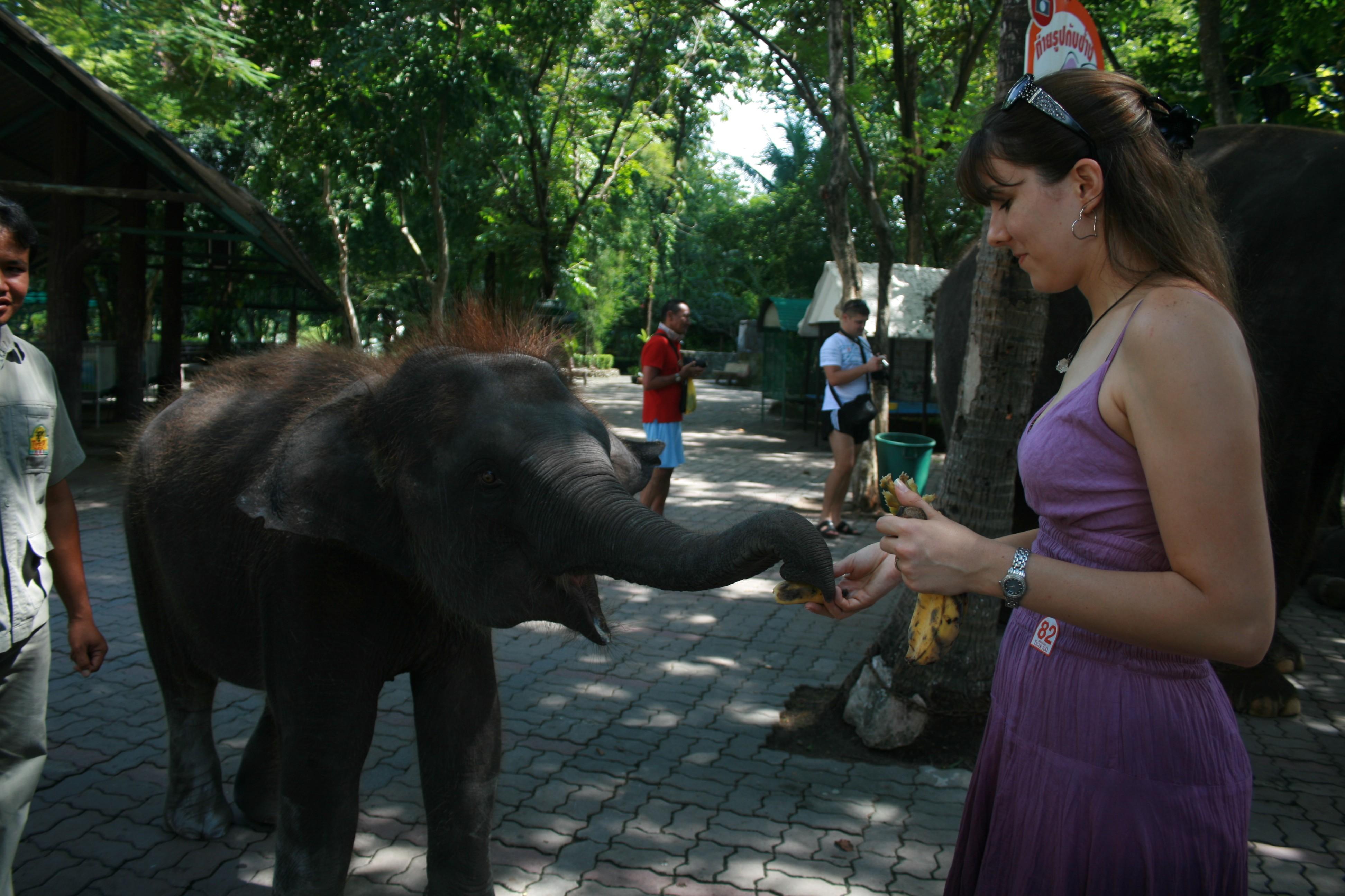 Feeding Baby Elephant Red Hair Thailand