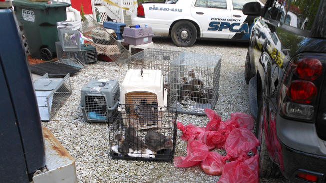 kent cat rescue