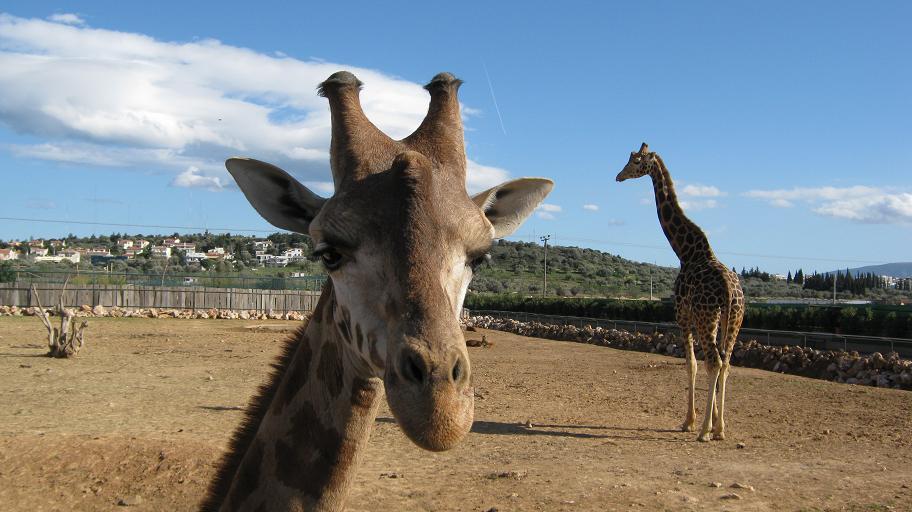 Athens Day Trip: Attiko Parko, the Athens Zoo & Bird Park