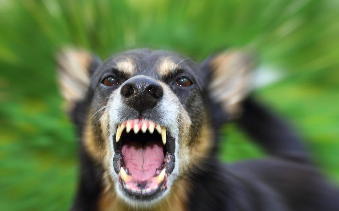 Criminal Negligence in Texas dog bite case