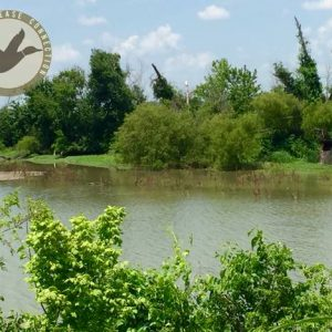 Honey Grove Duck and Dove Lease in Texas