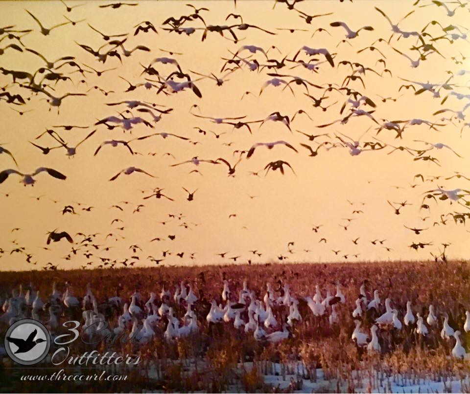 duck-hunts-in-kansas-2