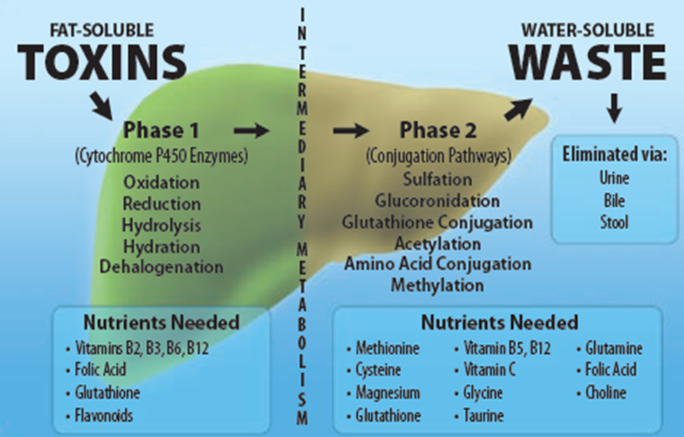 toxins and waste diagram