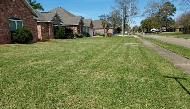Tender Care Lawn Services | Lawn Care and Grass Cutting Services