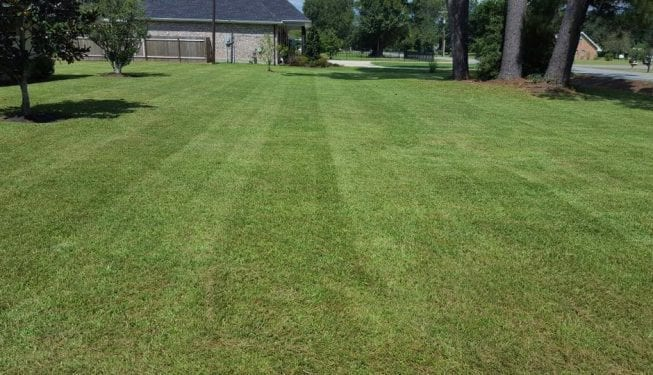Tender Care Lawn Services | Lawn Maintenance And Grass Cutting Service