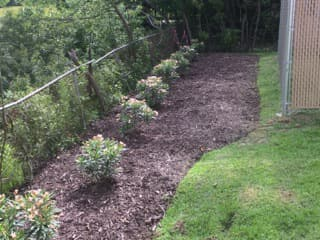 Tender Care Lawn Services   Plant Installation