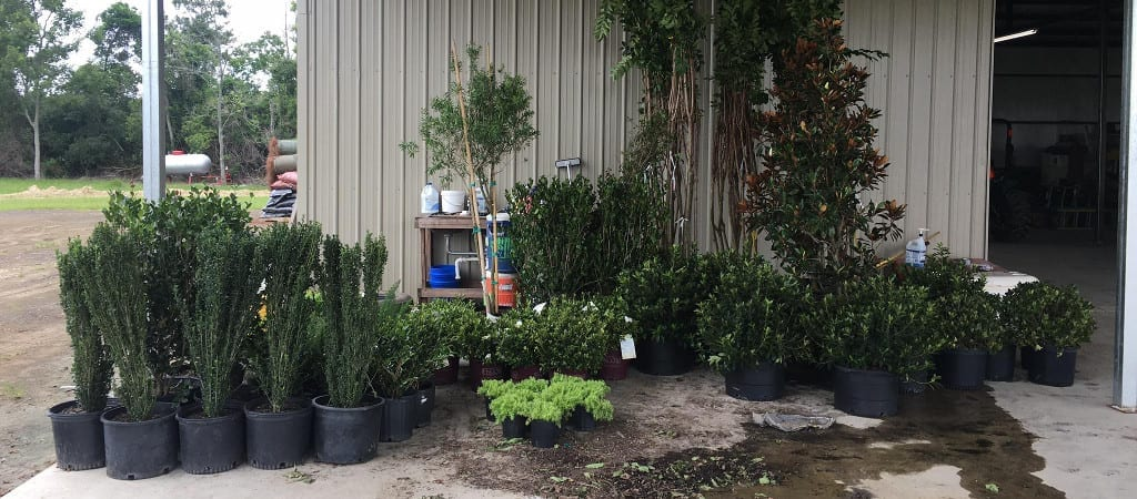 Tender Care Lawn Services   New Plants