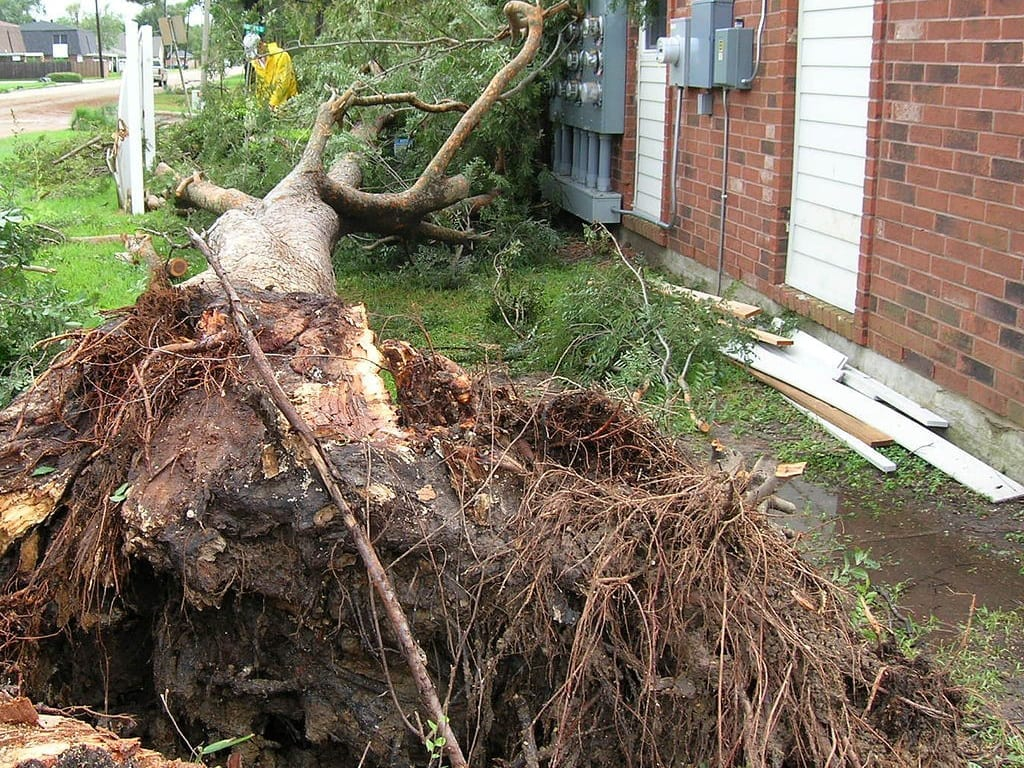 Landscape Maintenance Services - Weathering the Storm