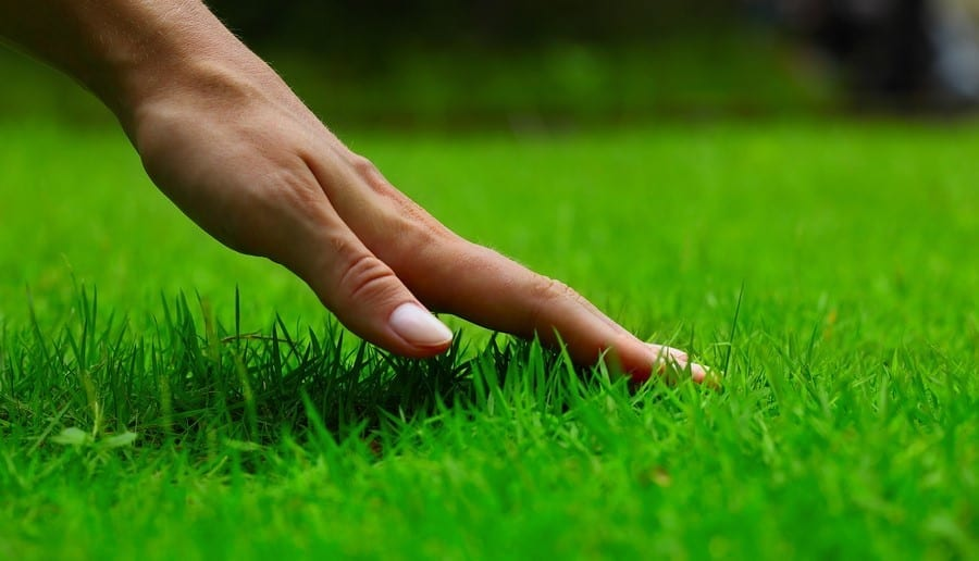 Landscaping Companies provide lawn care services for a green lawn