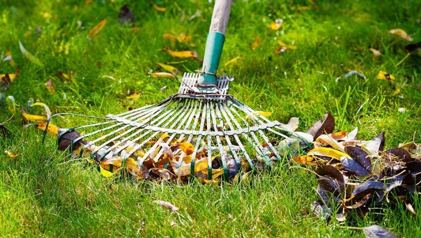 Tender Care Lawn Services | Lawn Care Services
