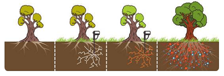 Tender Care Lawn Services | How Fertilizer Helps