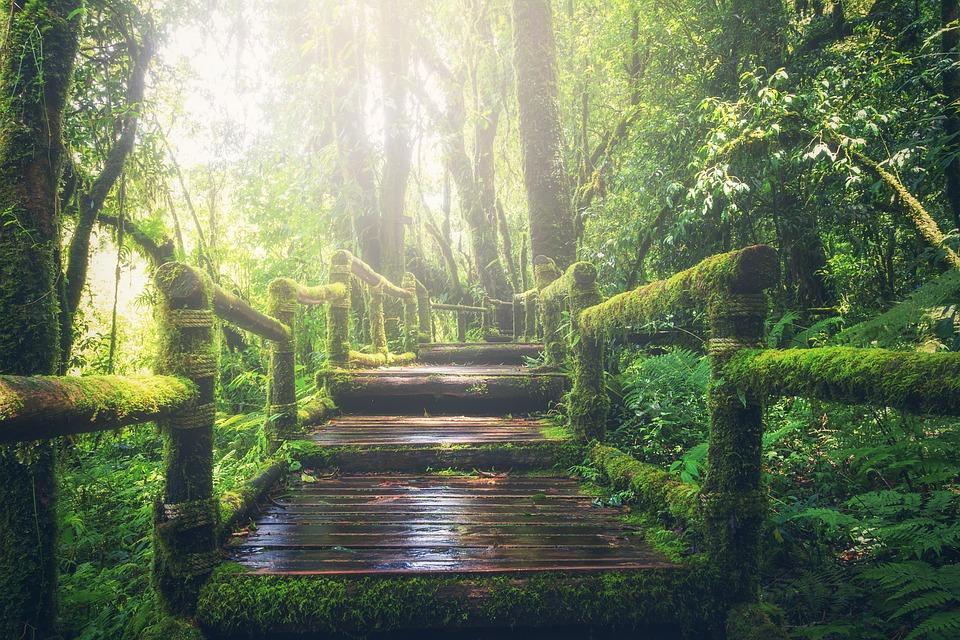 Japanese forest bathing