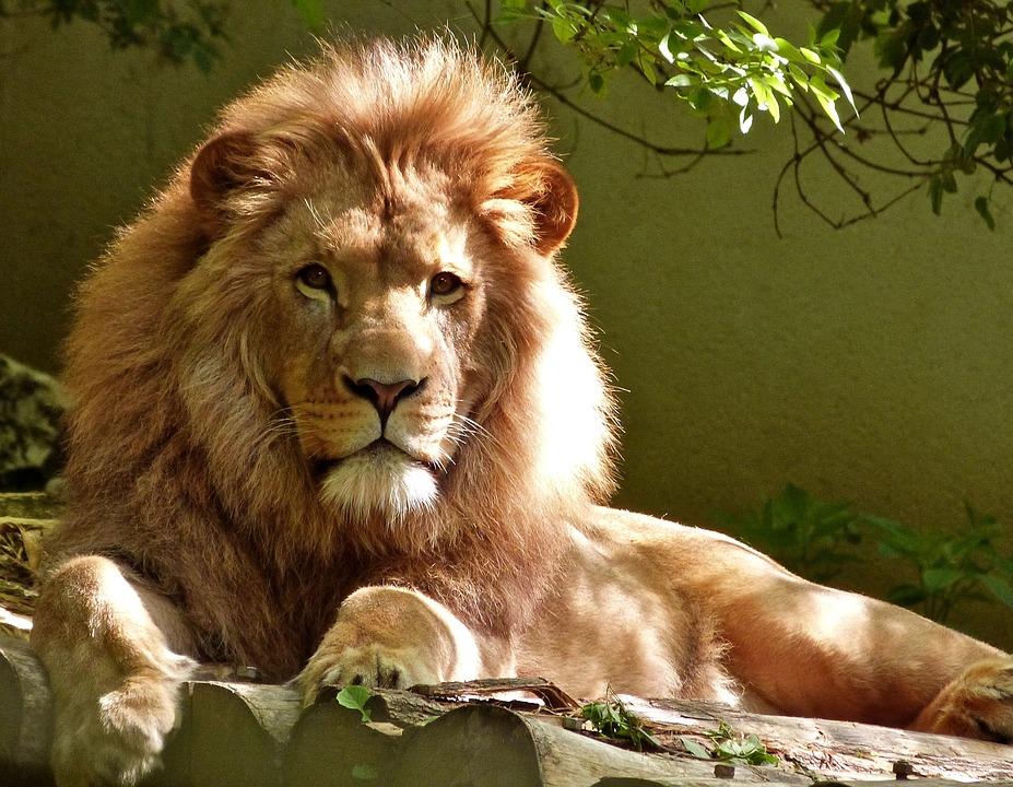 Leo man in love