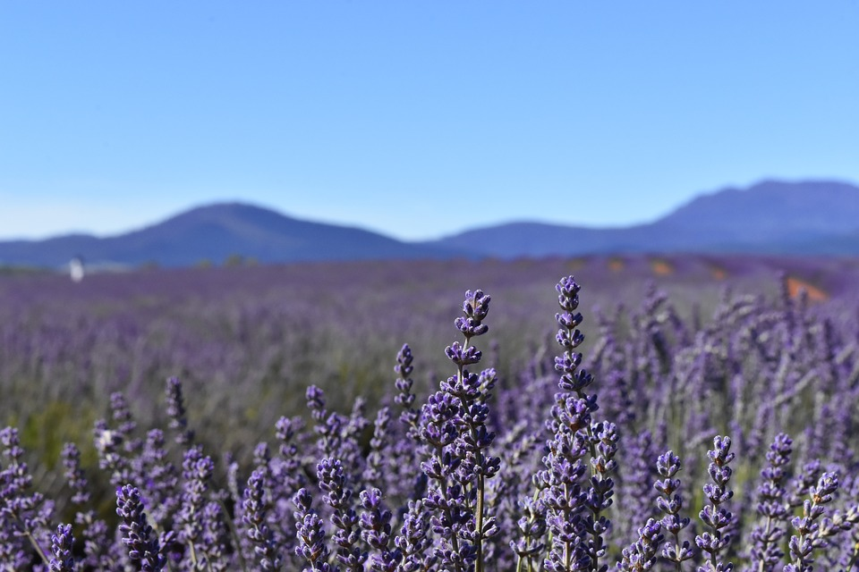 lavender orbs meaning