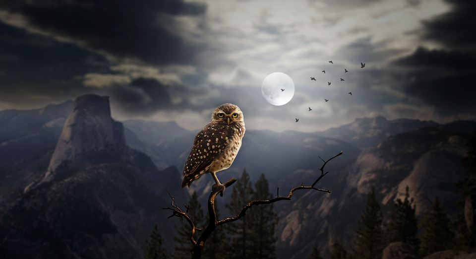 The Owl totem in Native American astrology