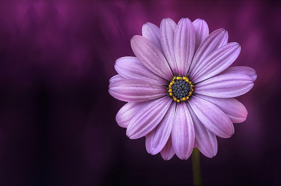 purple orbs meaning