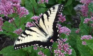 Enhancing native habitat
